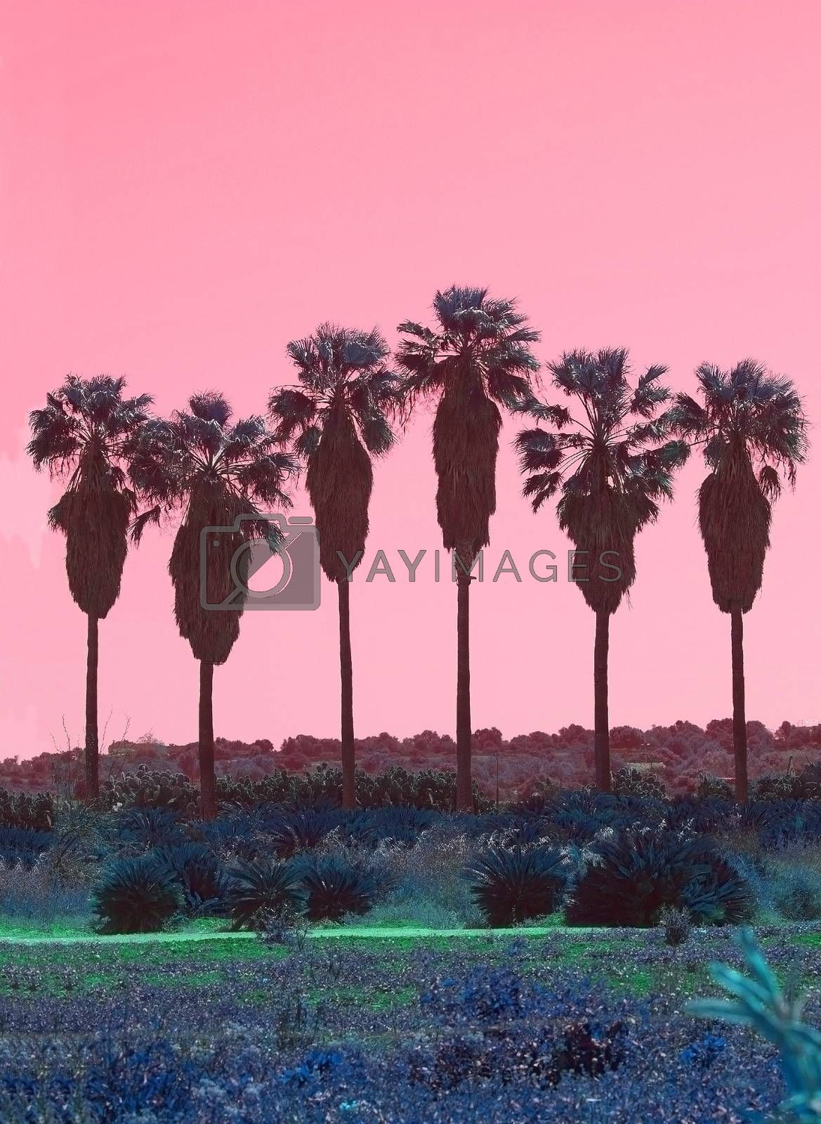 Palm trees in a row with high trunks abstract surrealistic pink and green color scheme