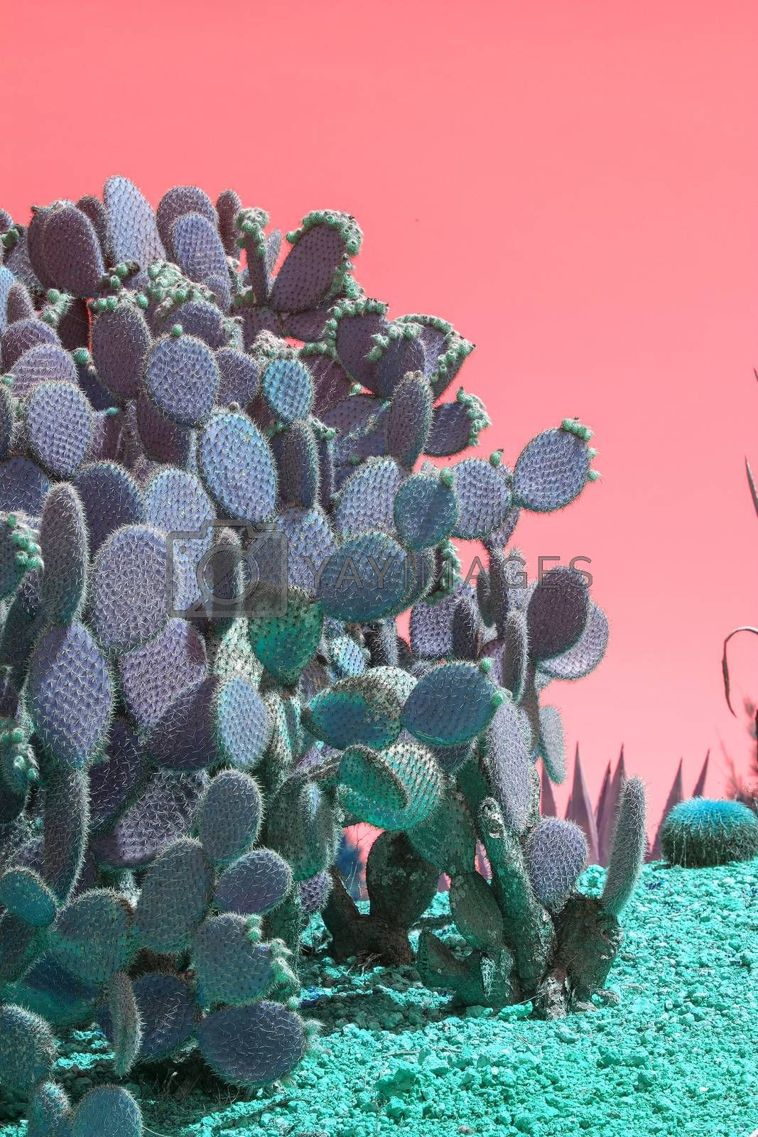 Surrealistic abstract cactus and succulent plants in arid landscape with pink red sky