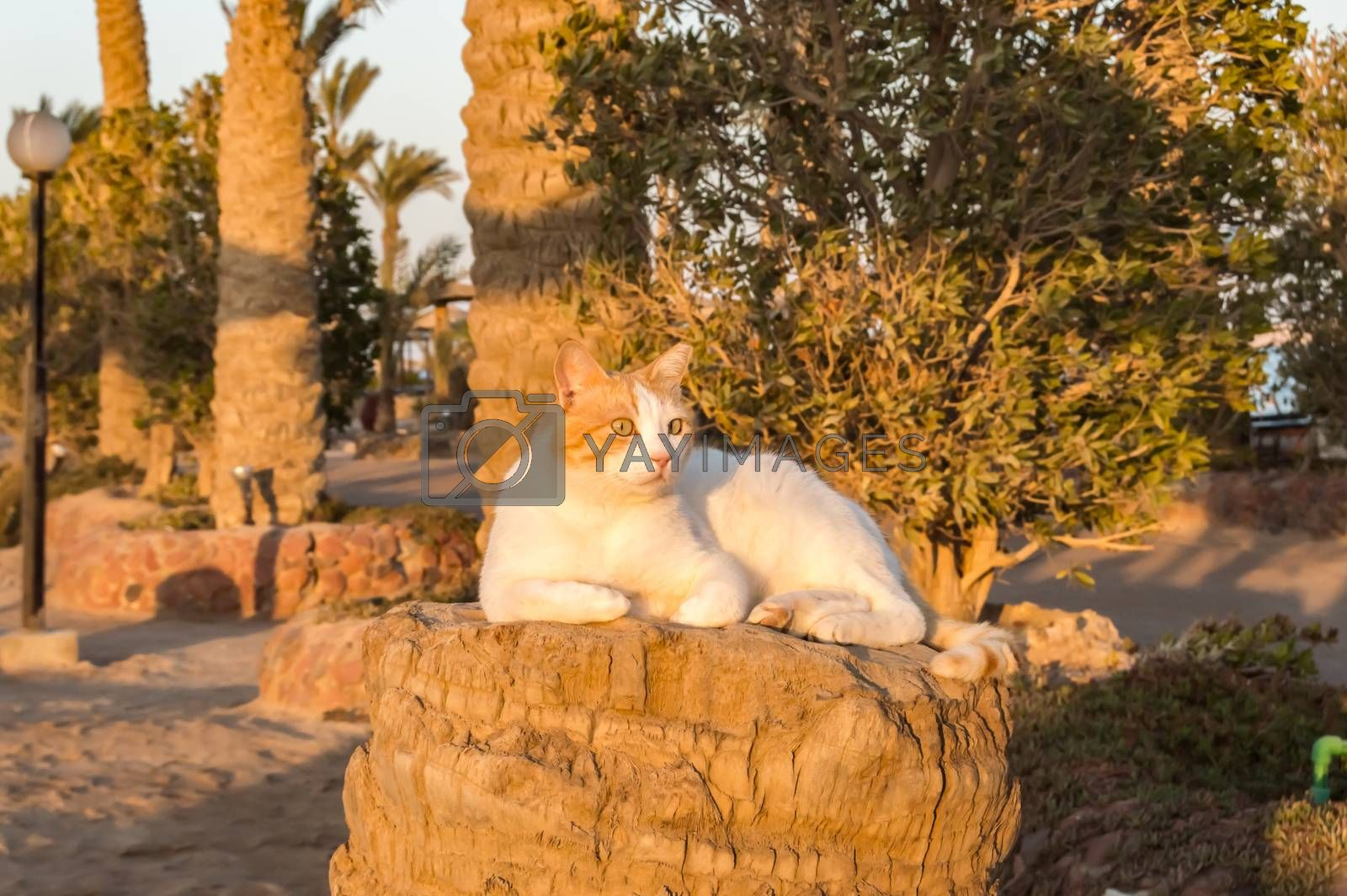 White and red cat sleeping on the trunk  by Philou1000