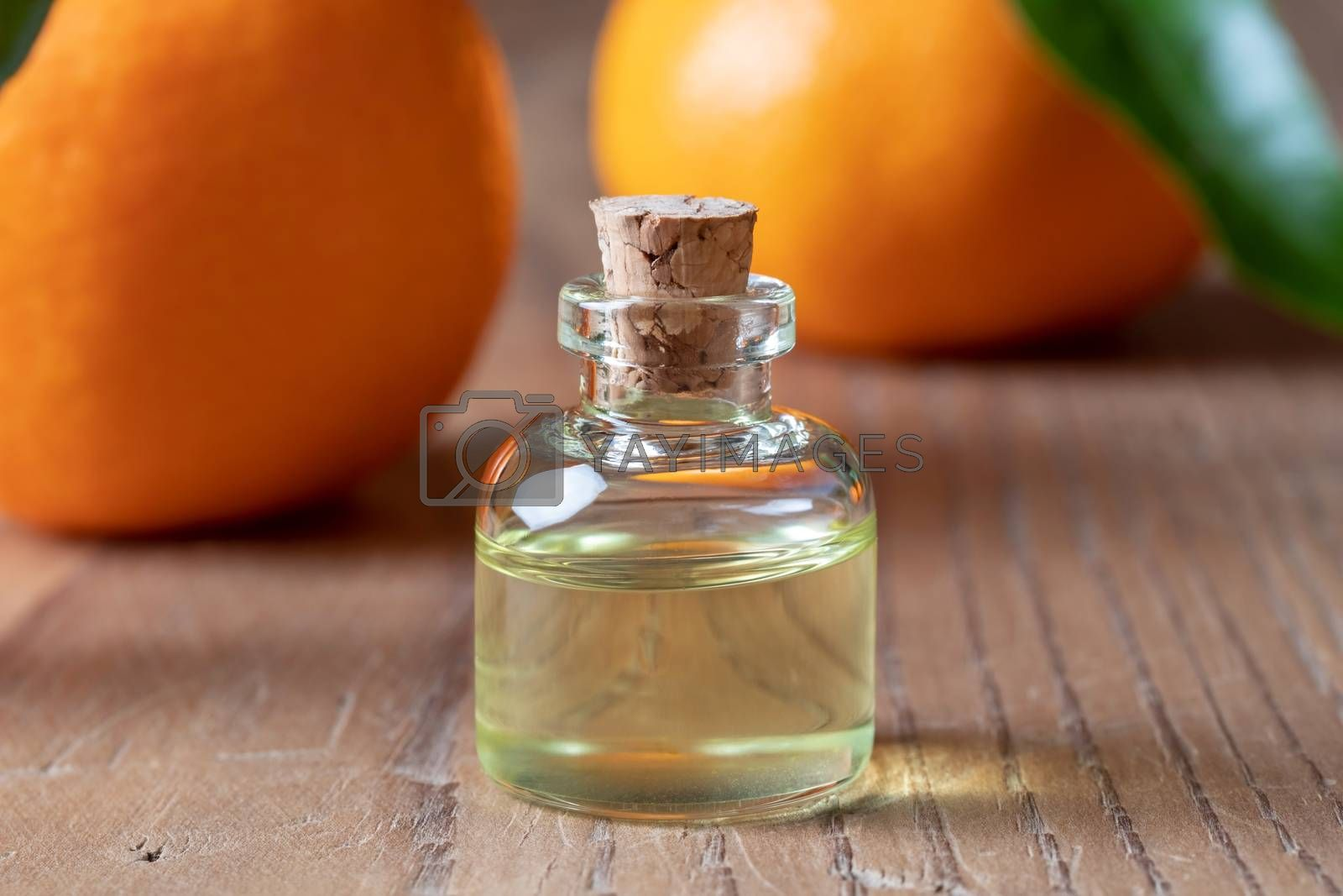 A bottle of tangerine essential oil with tangerines by Madeleine Steinbach