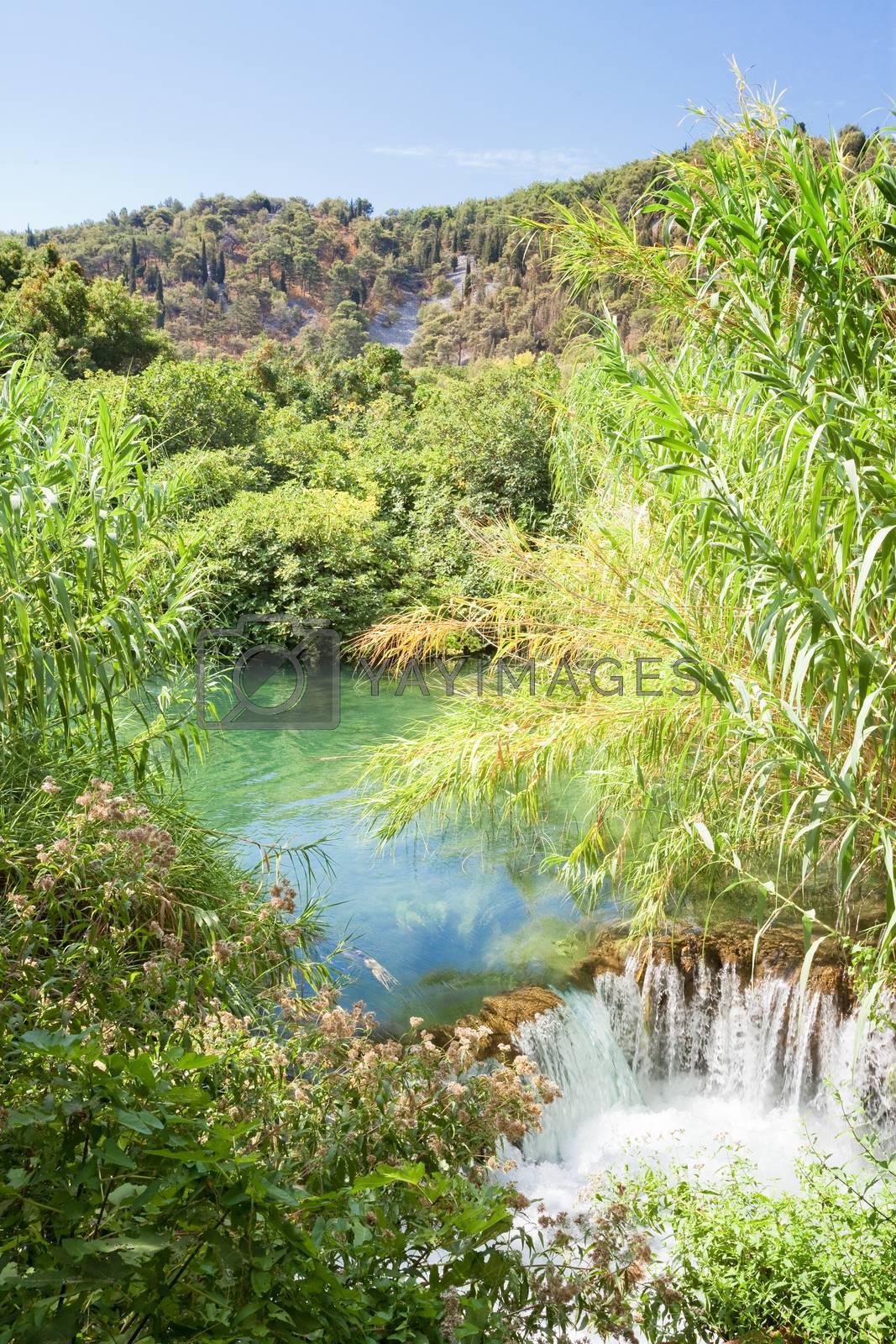 Krka, Sibenik, Croatia, Europe - Water reed at a small downfall within Krka National Park