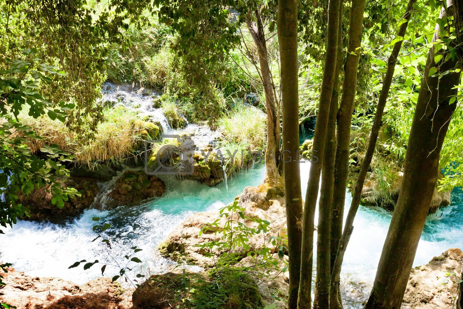 Krka, Sibenik, Croatia, Europe - Light and shadow within the beatiful forest of Krka National Park