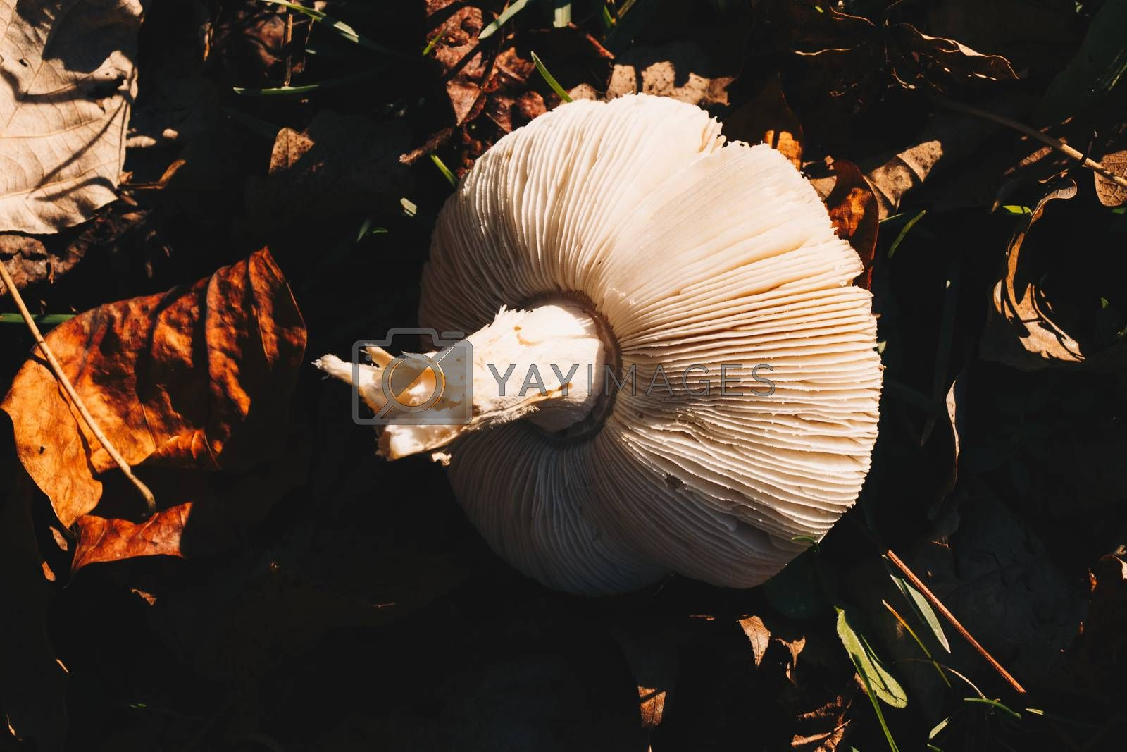 Mushrooms plant in autumn in the forest in view