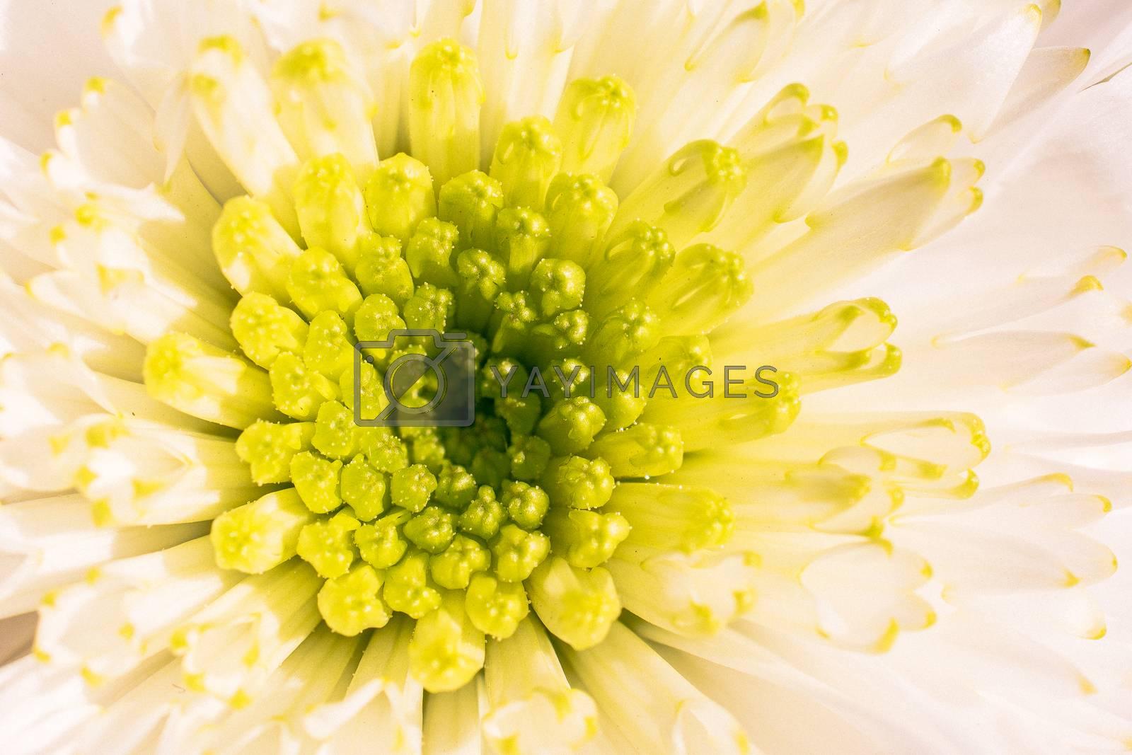 Beautiful colorful natural spring flowers in macro view