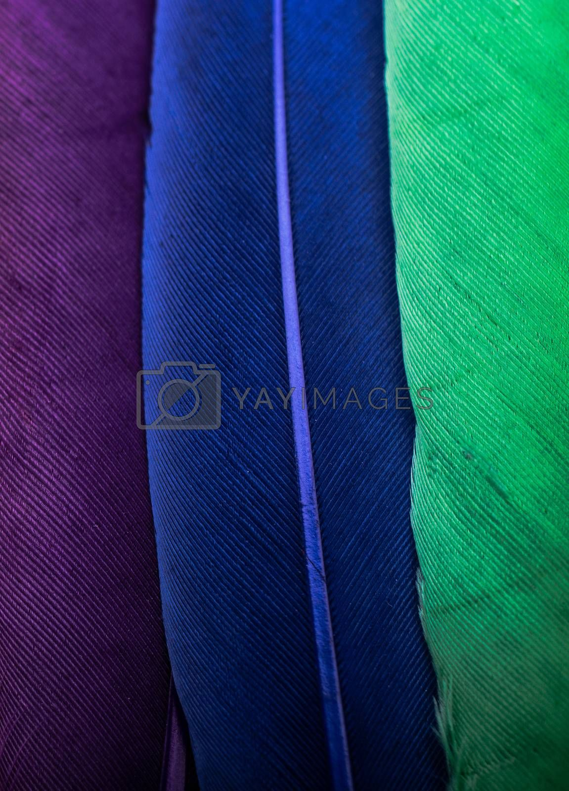 Studio shot photo of colored bird feathers as texture background