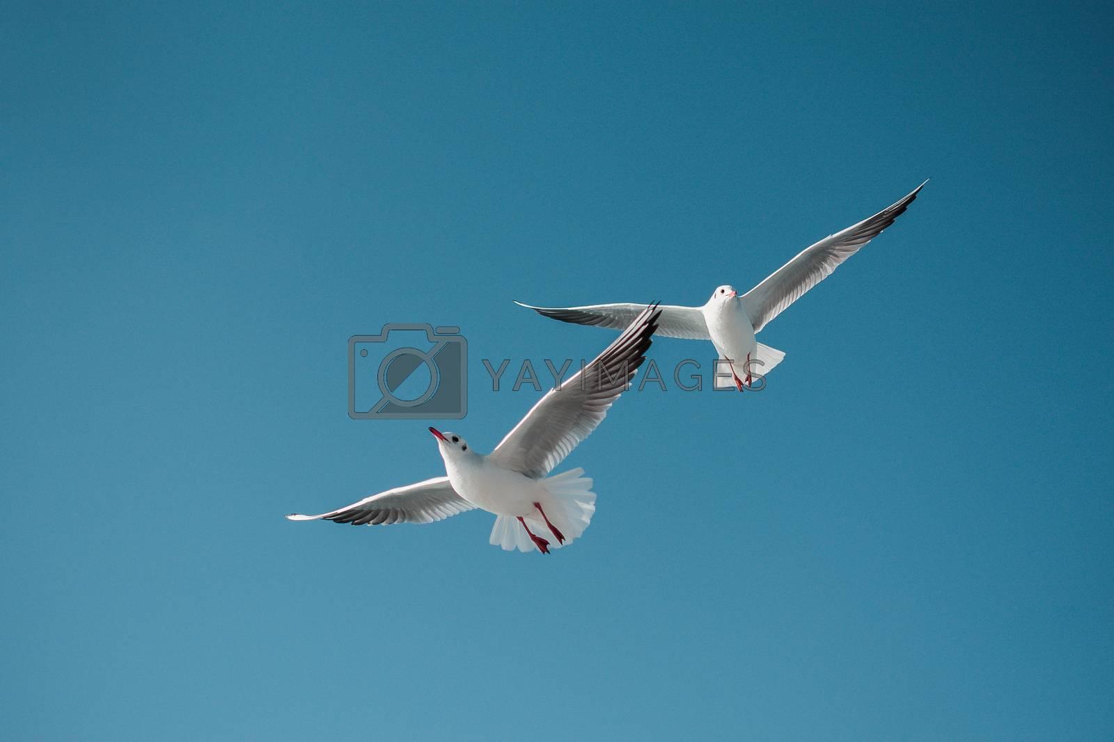 Seagulls flying in the sky by berkay