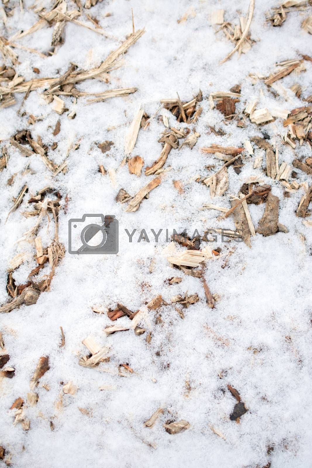 Wood pieces on white snow in winter by berkay