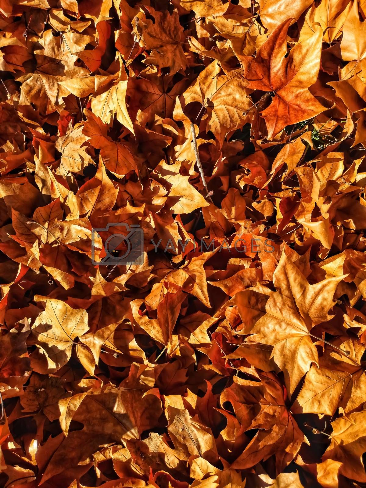 Dry autumn leaves in brown tones