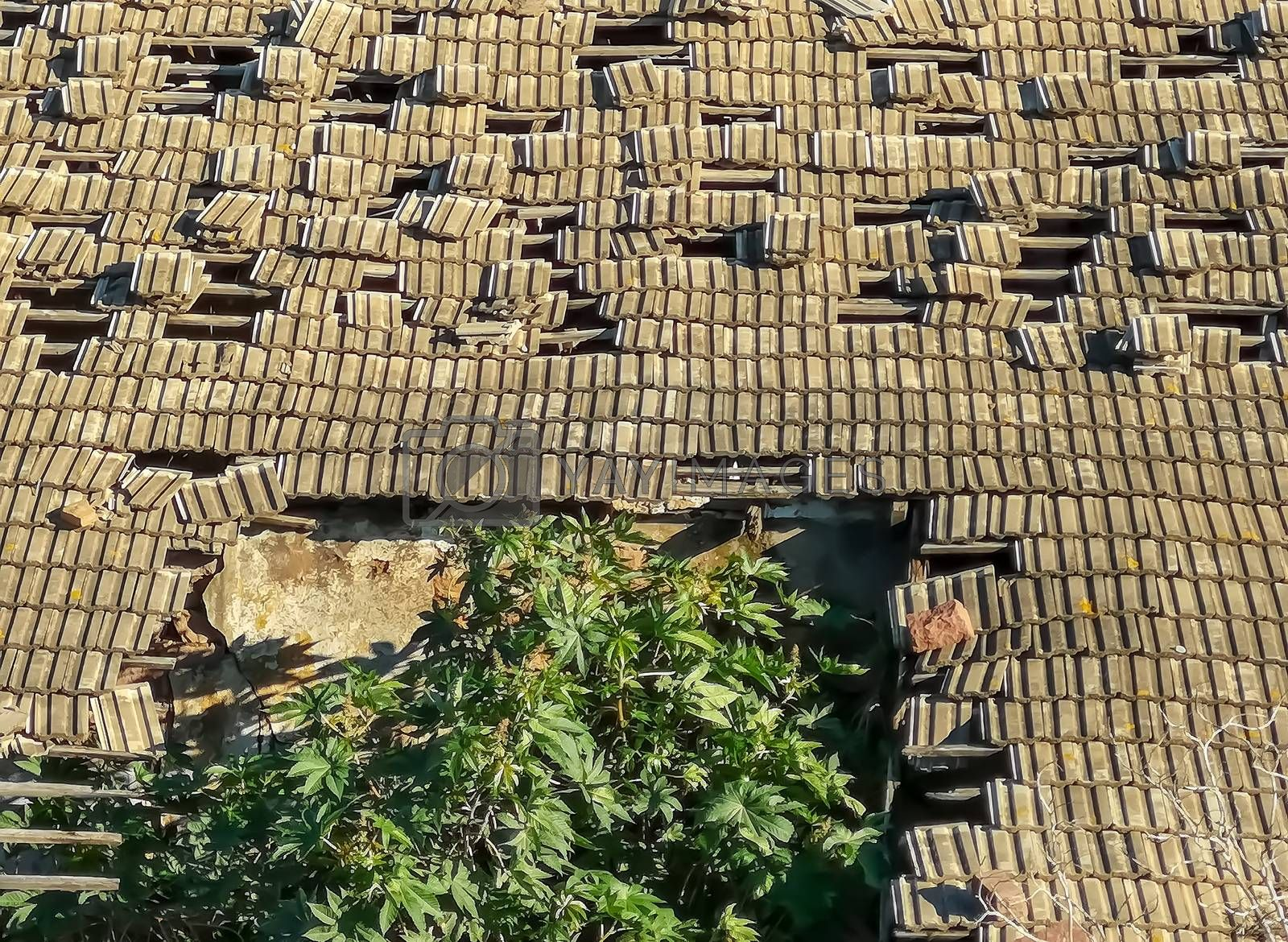 Roof of a gray tiles collapsing with a tree emerging