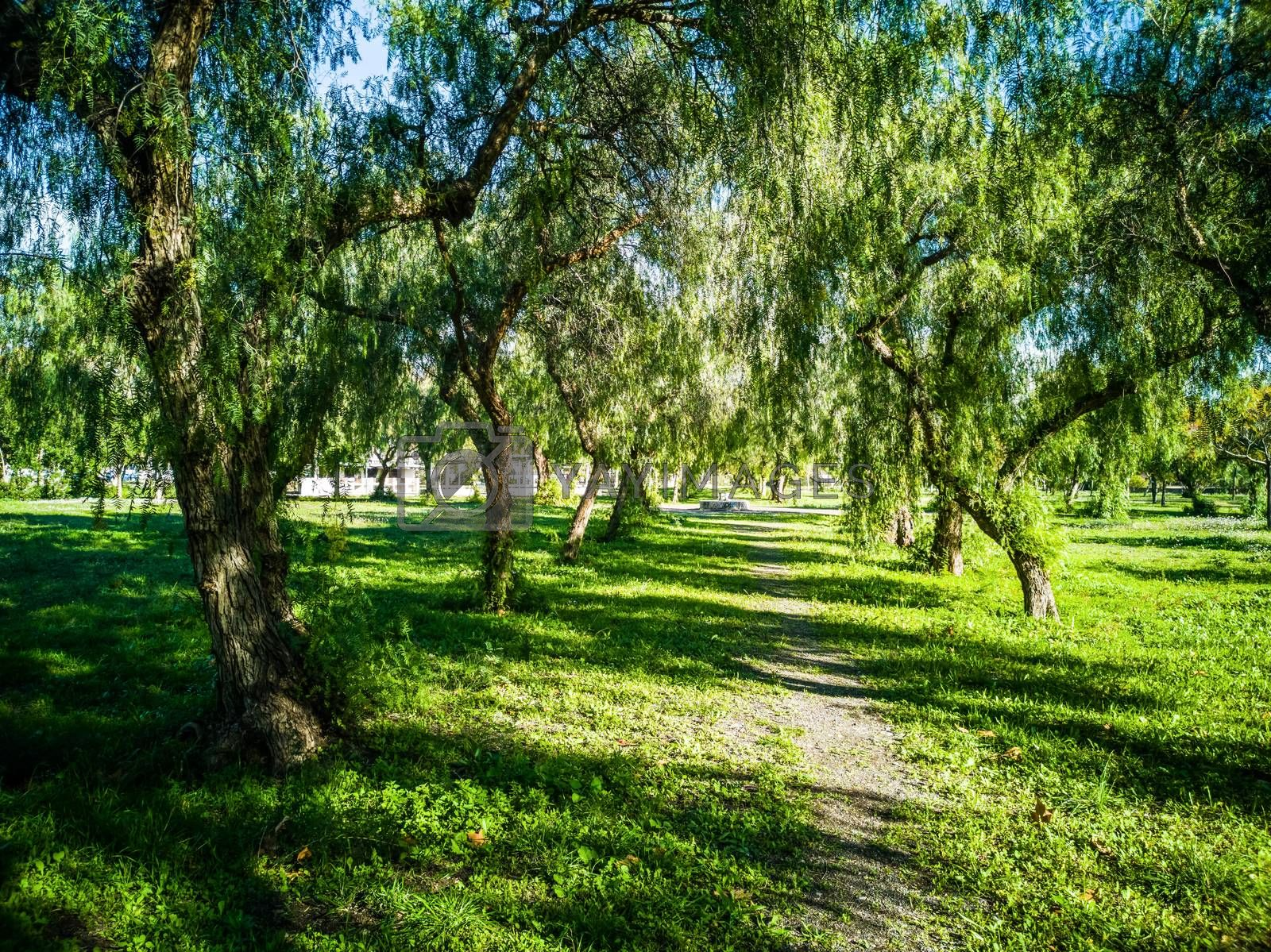 View of very green trees and grass in a large park of Puerto de Sagunto
