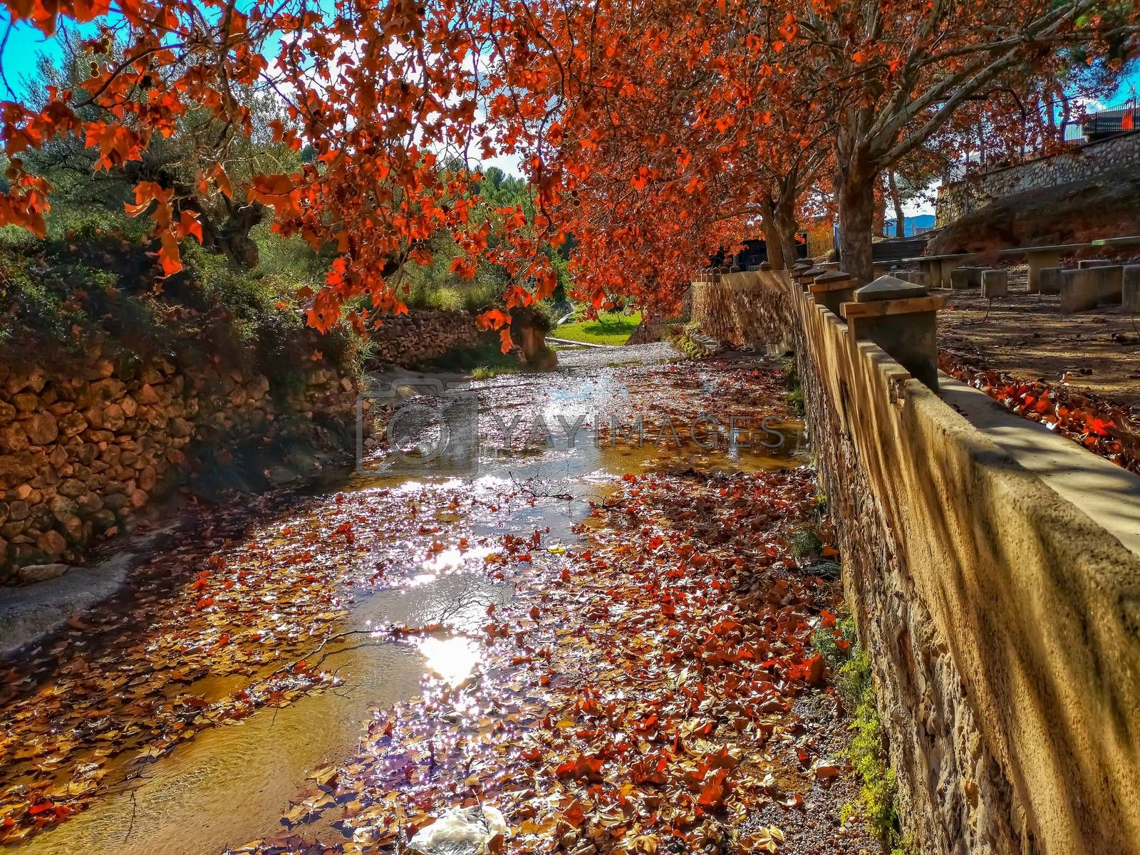 Autumnal landscape with many dry leaves with brown tones