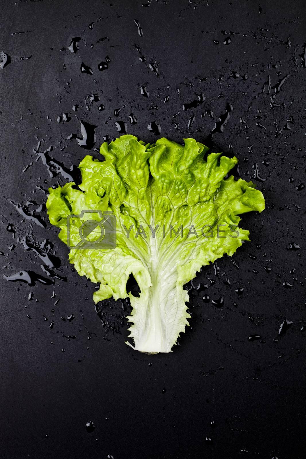 Green organic lettuce salad leaf on black wet background. Top view on black background.