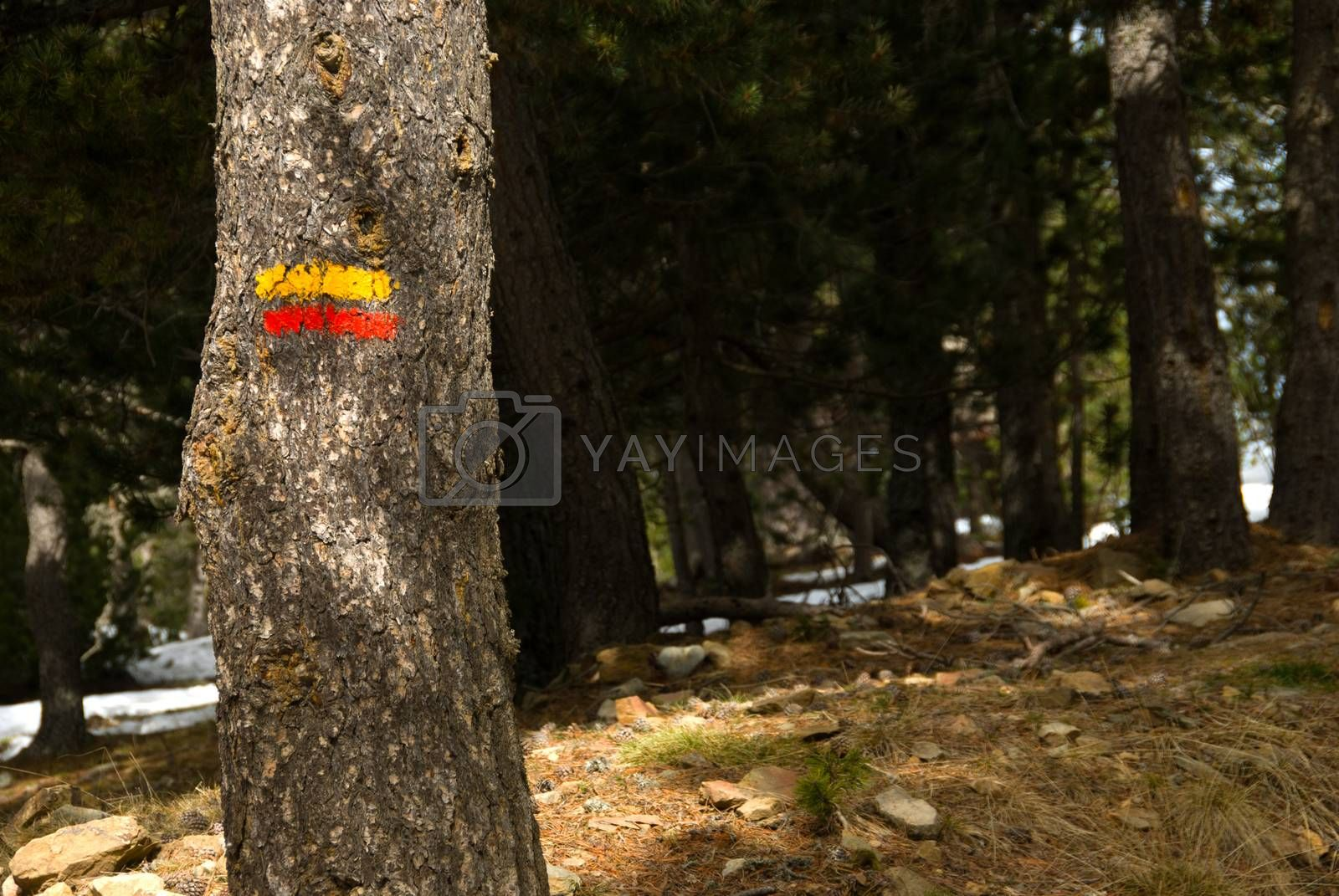 Yellow and red hiking mark on a pine tree bark