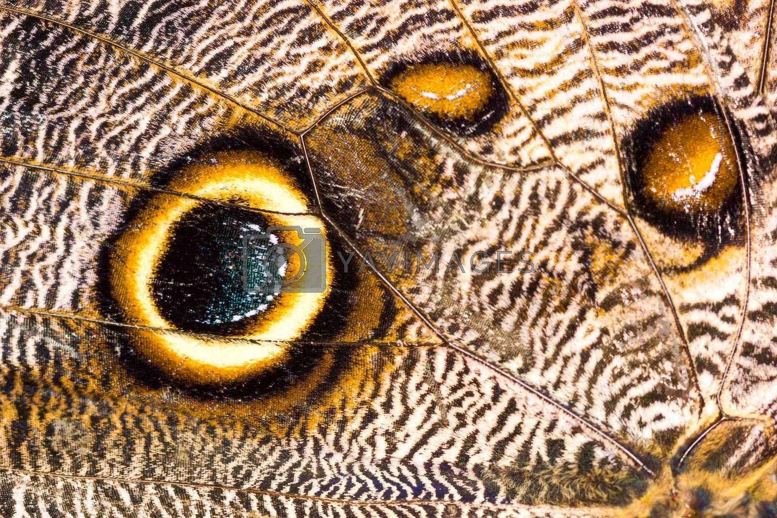 Macro closeup of brown butterfly wing texture background pattern. by petrsvoboda91