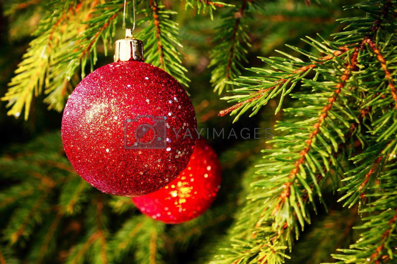 Red balls on spruce, part of the Christmas tree with Christmas decorations by galsand