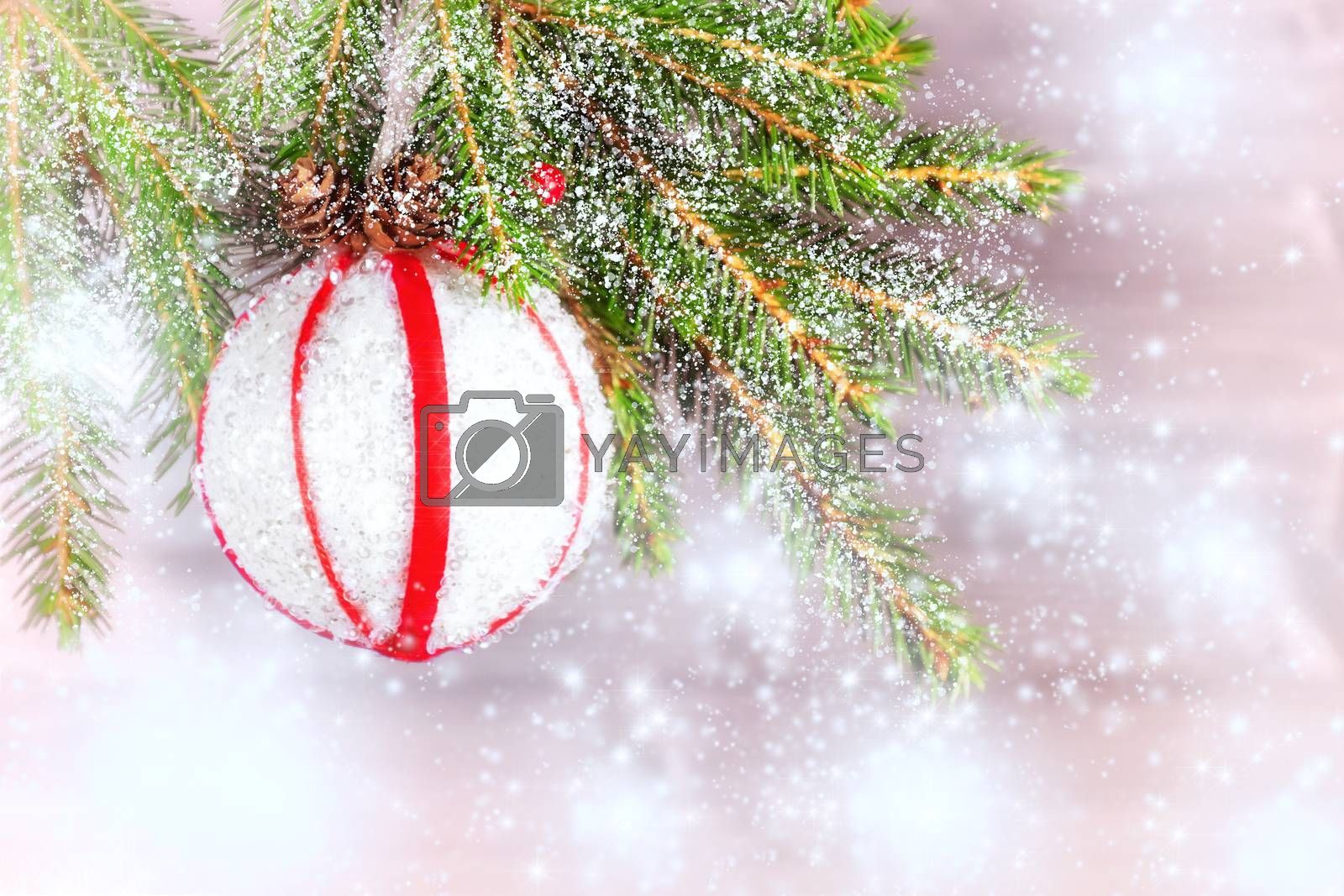 Branch of a Christmas tree decorated with snow, a white ball with red ribbons and cones. Copy space for text by galsand