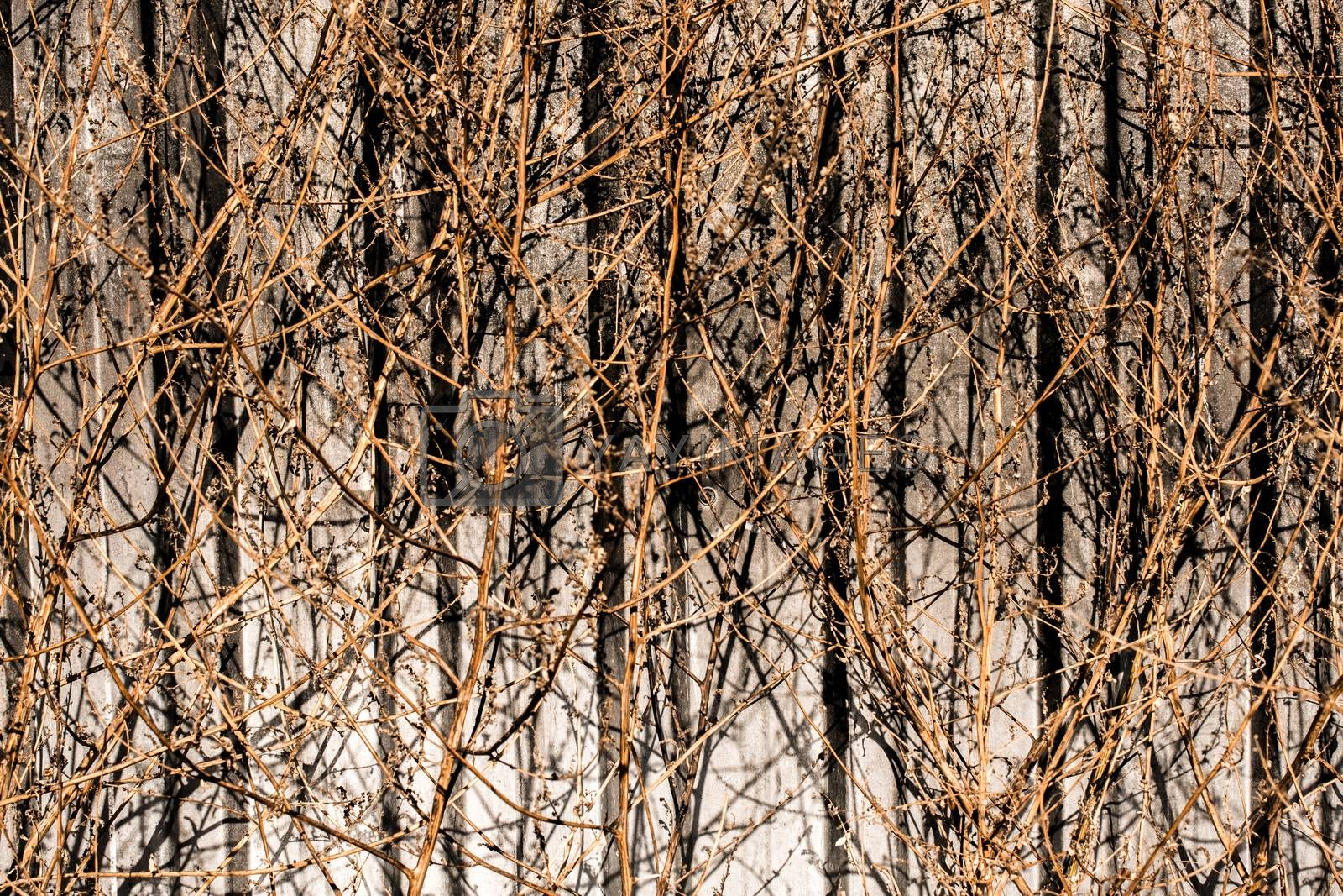 Dried trees on a gray background in autumn in view