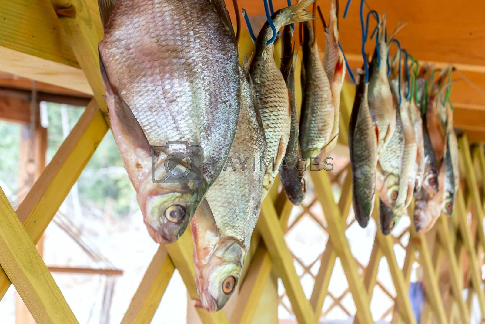 River fish hanging upside down dried on a rope by galsand