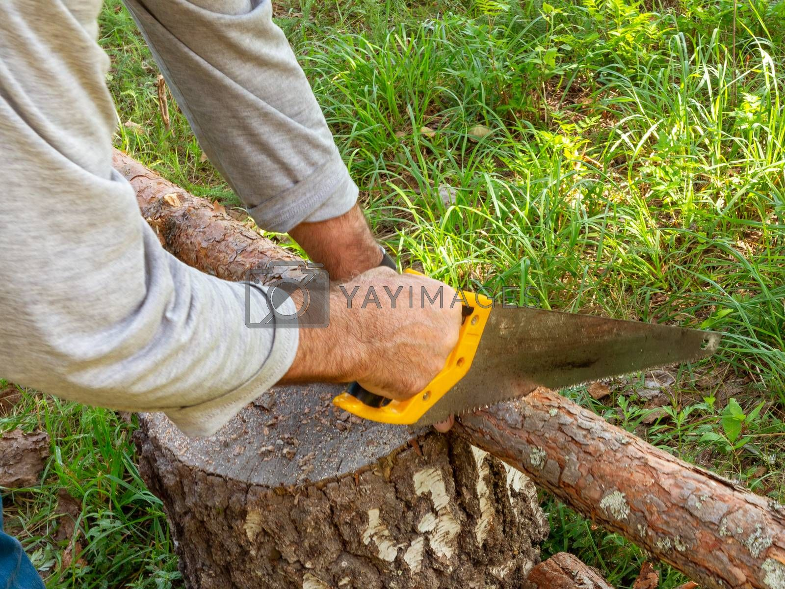 Hands of a man saw with a hand saw a small log lying on a stump by galsand