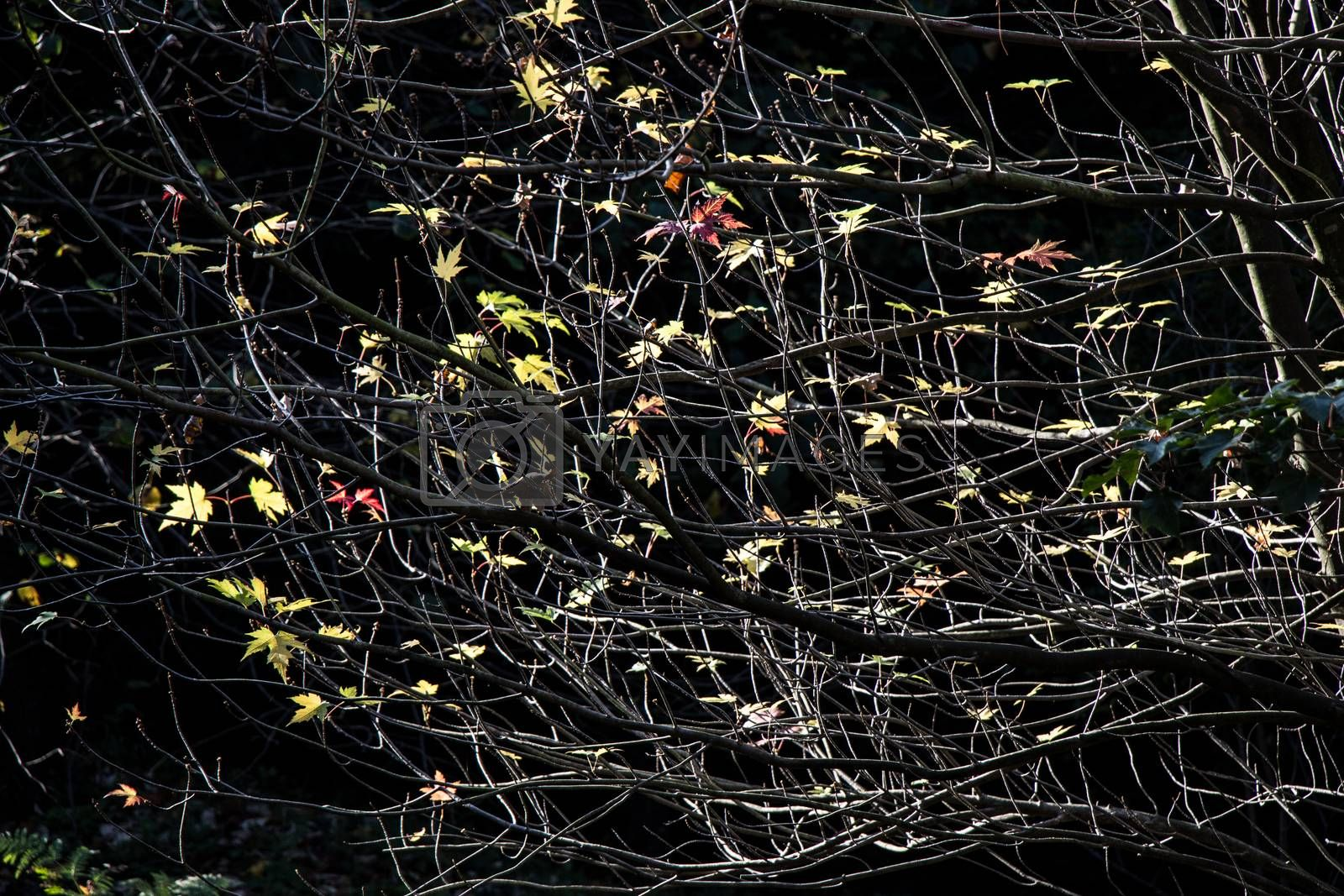 Beautiful dry leaves as an autumn background texture