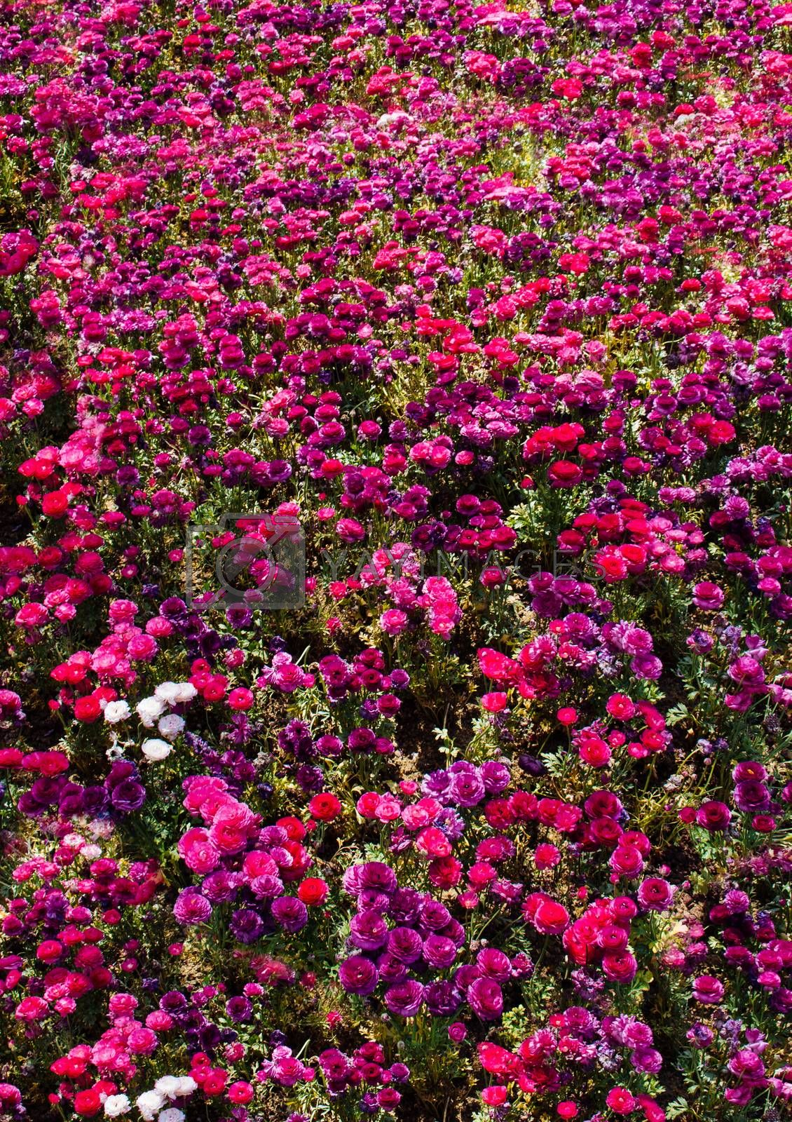 Blooming beautiful colorful fresh natural flowers in view