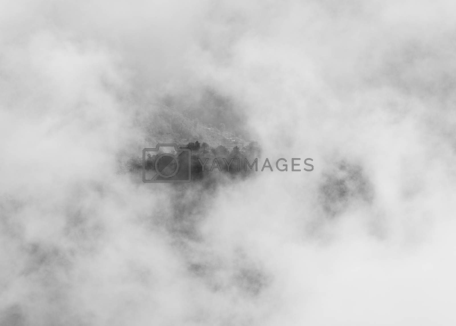 Trees on hilltop through clouds, black and white photography