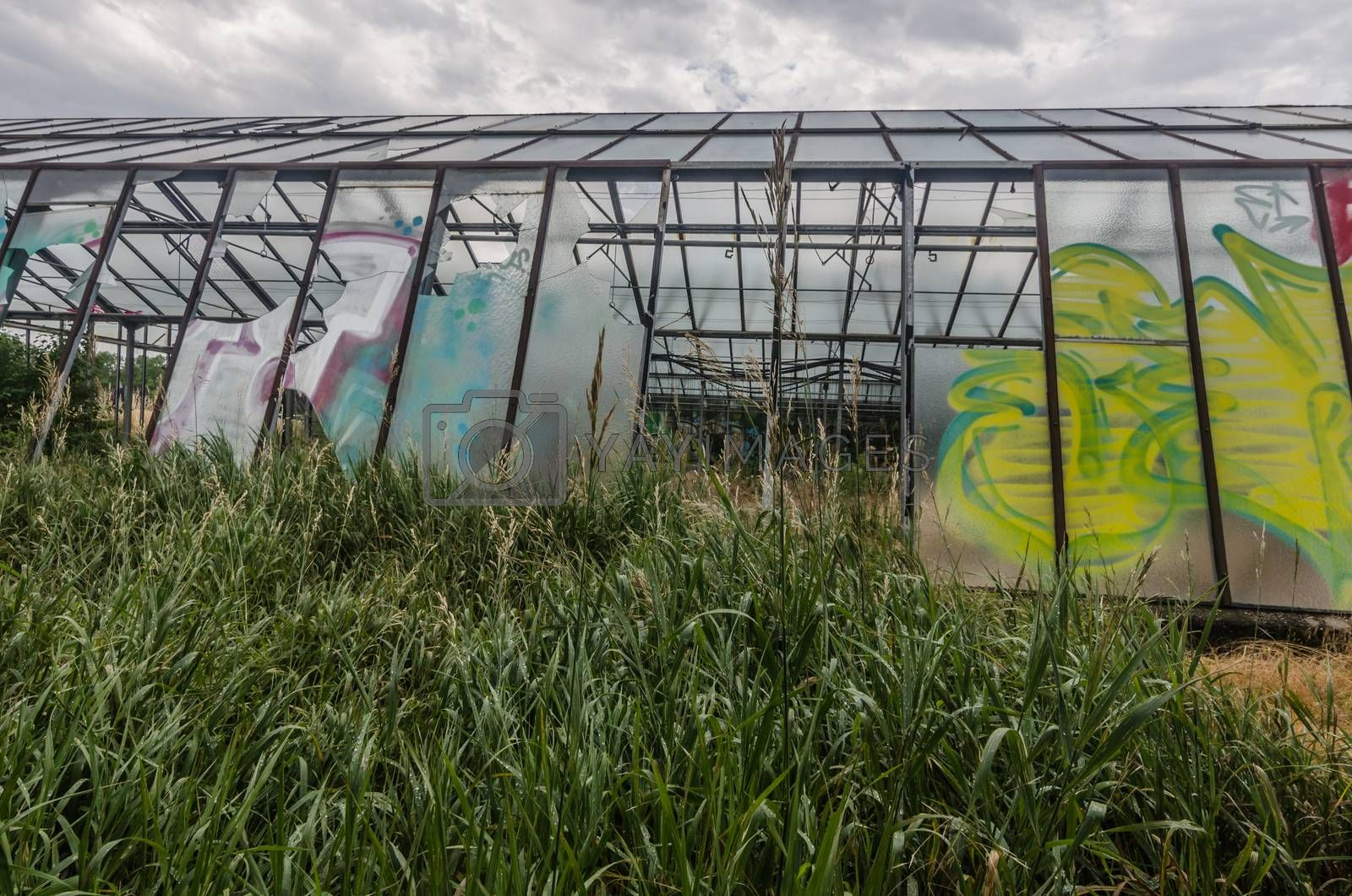colorful old gardening by thomaseder