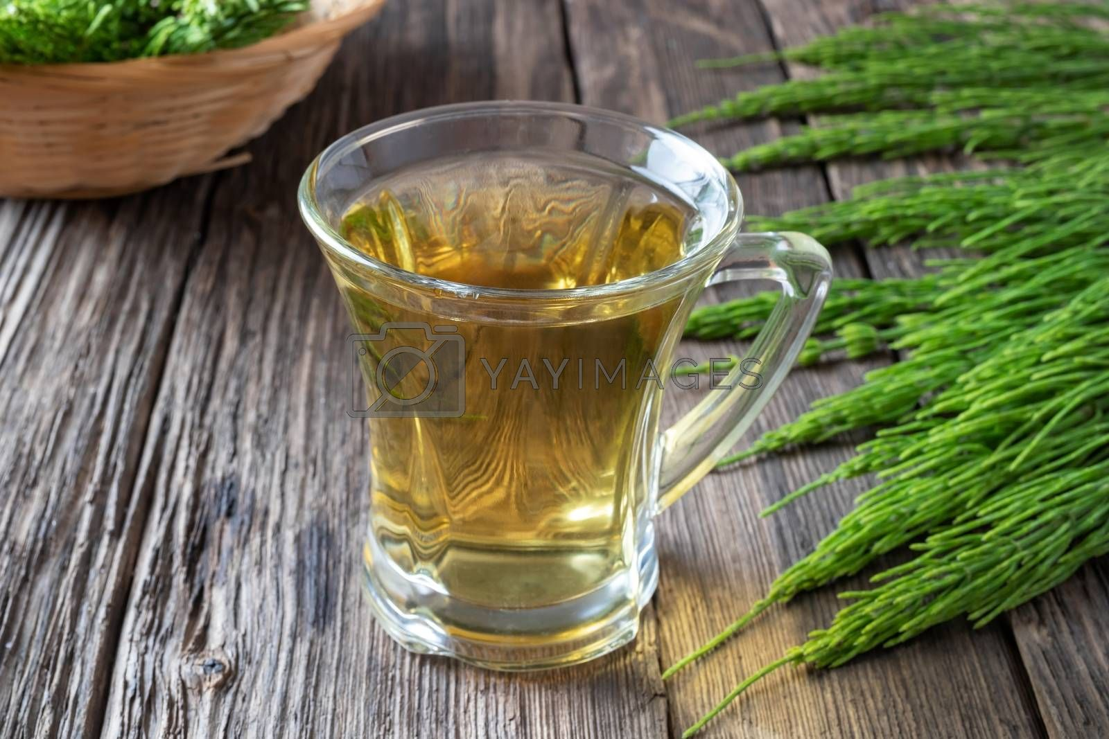 A cup of horsetail tea with fresh plant in the background