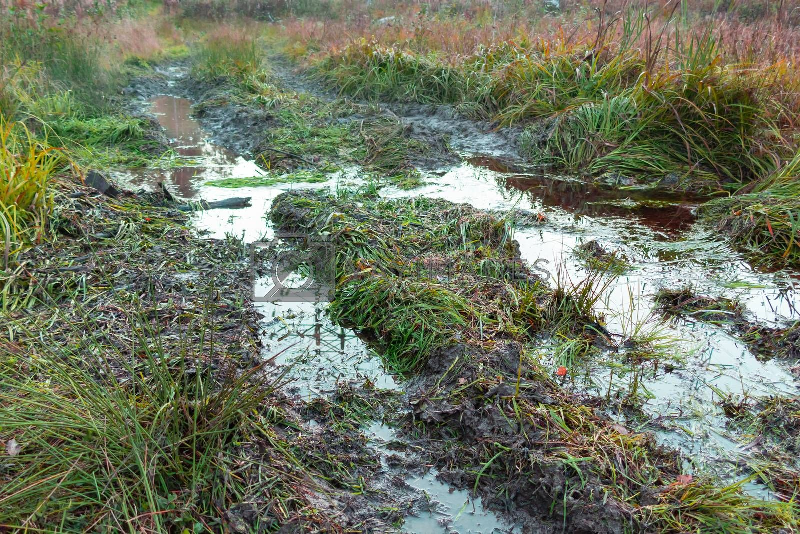 Off-road track in a countryside landscape with a muddy road and puddle. Extreme path rural dirt. Summer landscape with grass and traces from the passage of transport on the surface.