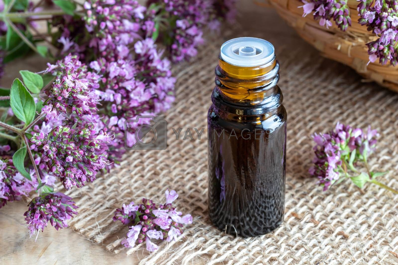 A bottle of essential oil with fresh blooming oregano on a table