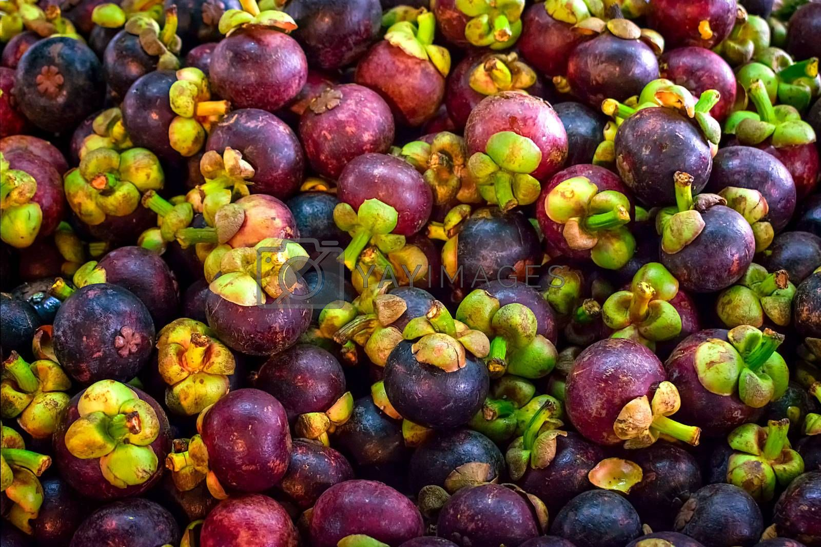 Pile of Fresh Mangosteen in the Local Market
