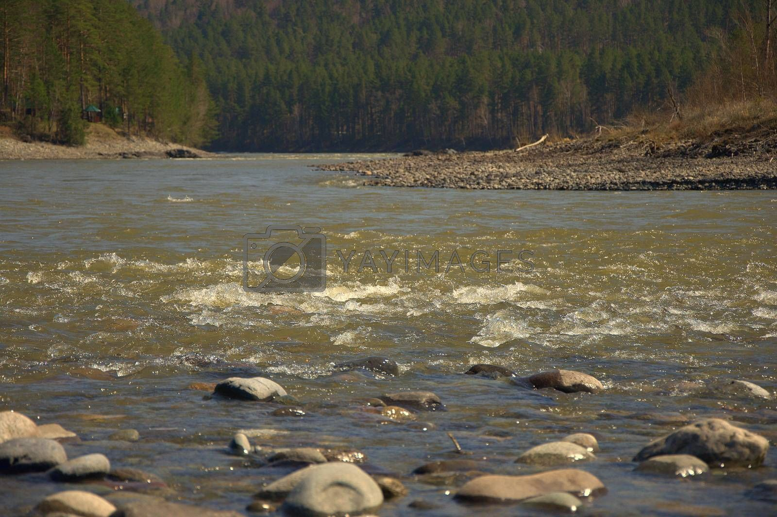 The rapid Katun river, winds along the beautiful Altai Mountains. The picture was taken on a spring day. Landscape. by Alex Yellow