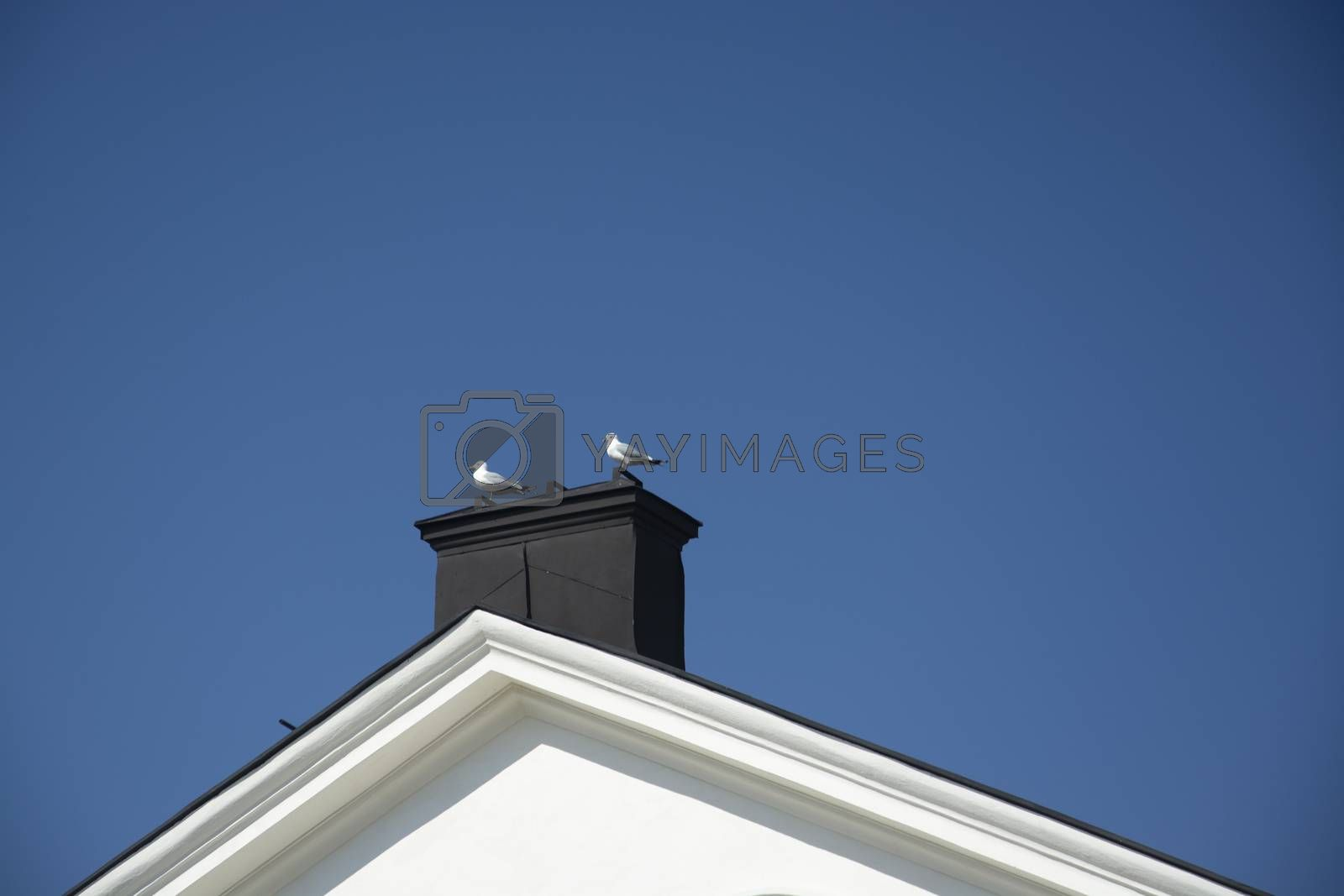Two seagulls sitting on a chimney rooftop against blue sky on a sunny spring day in Stockholm, Sweden.