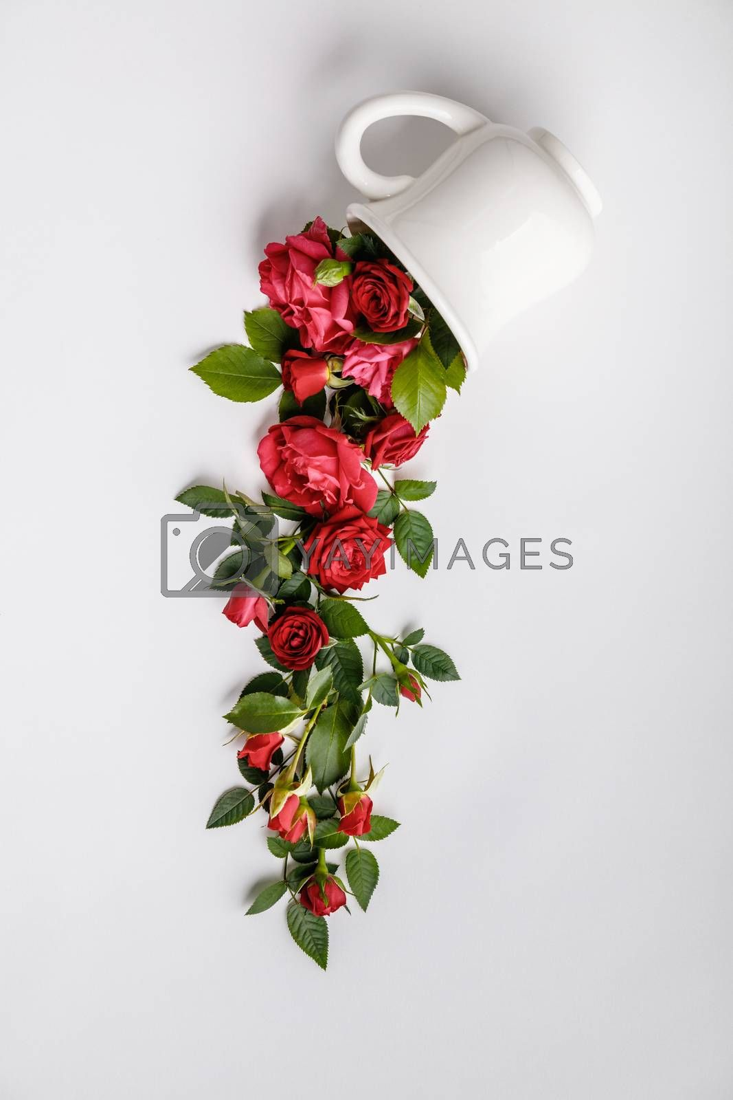 Creative layout made of coffee or tea cup with red roses on white background by klenova
