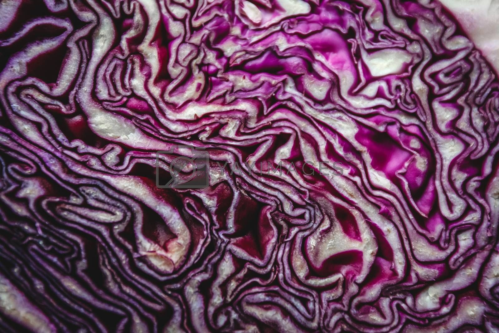 Background of the blue cabbage in the cut, macrophotography. Lar by Tanacha