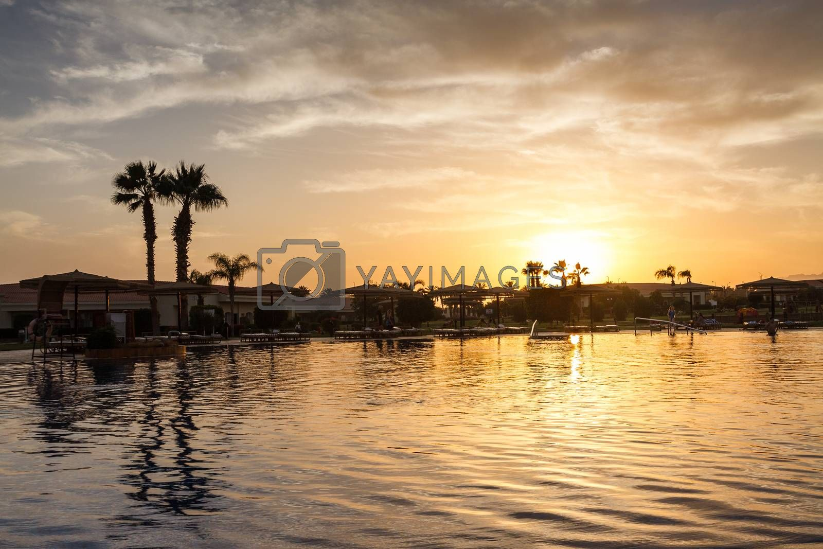 Landscape with palm trees, sunset, silhouette. Egypt.Sharm El Sh by Tanacha