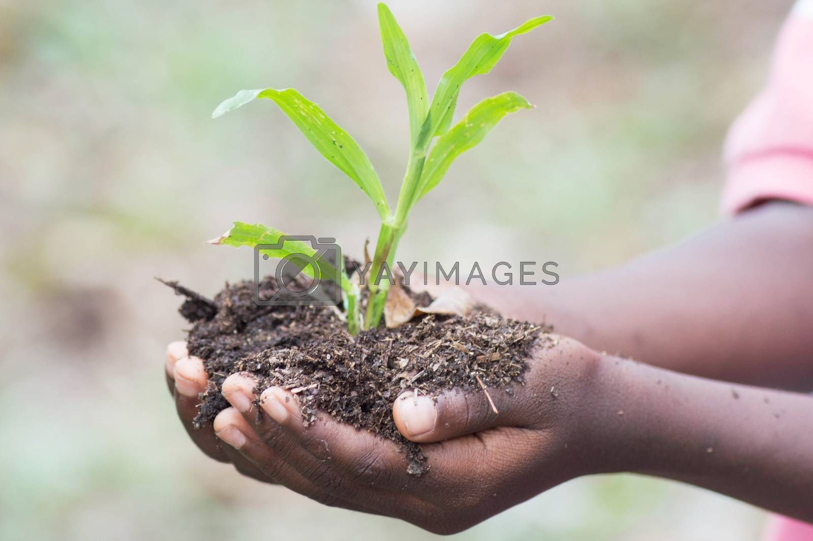 planting herbs by vystekimages