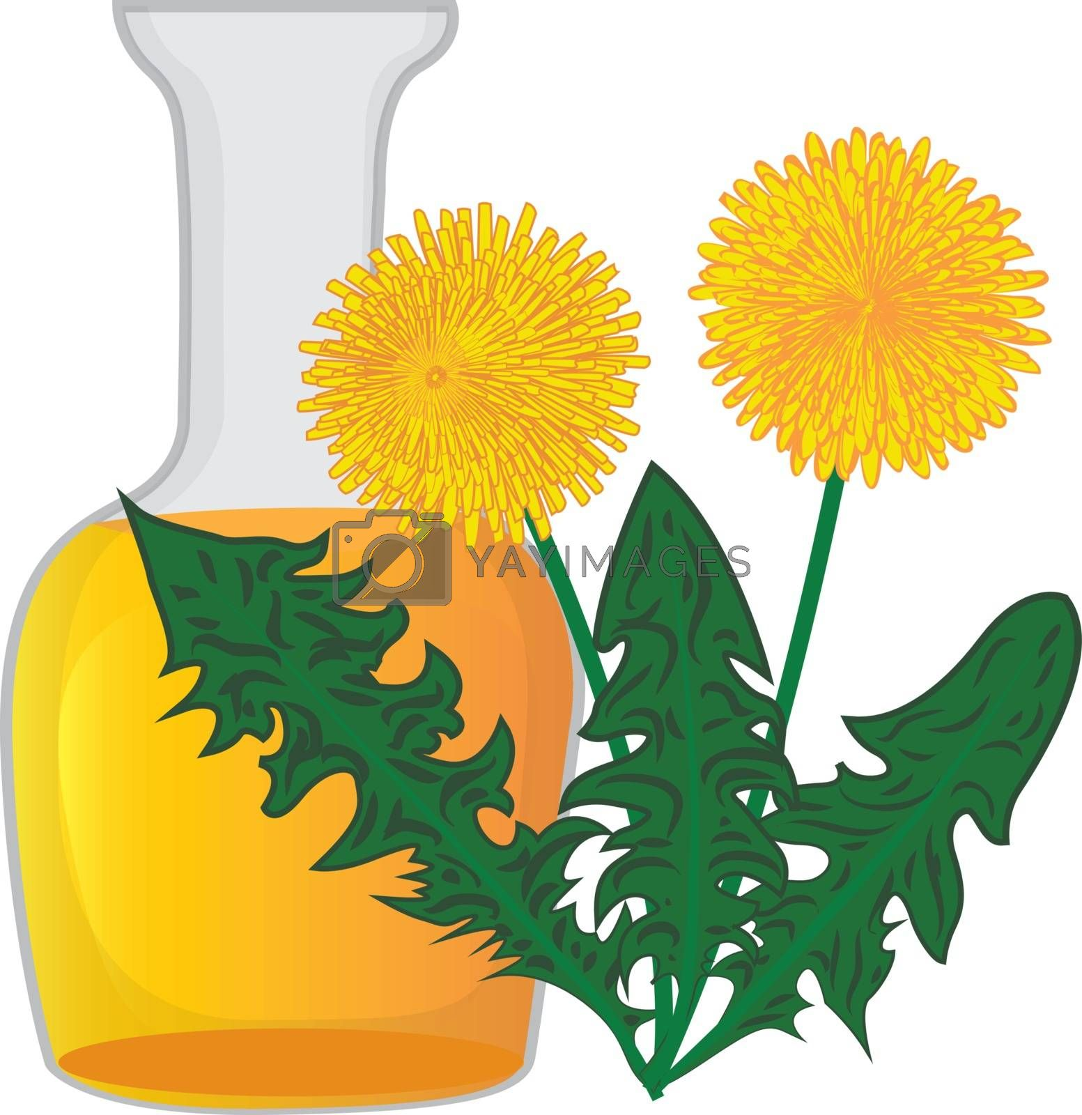 Dandelion essential oil by Olena758