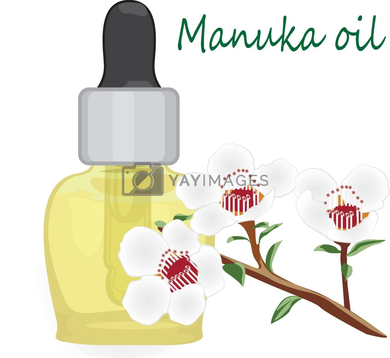 Manuka essential oil vector illustration Aromatherapy. Health care by Olena758