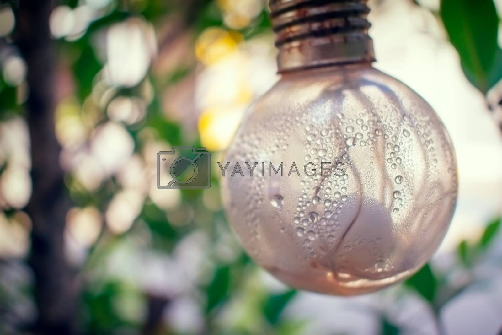 Condensation and Moisture Inside a Light Bulb