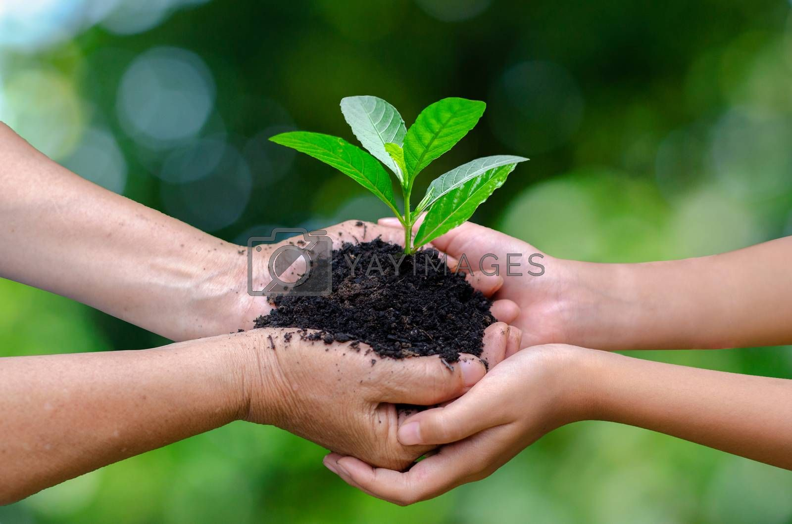 Adults Baby Hand tree environment Earth Day In the hands of trees growing seedlings. Bokeh green Background Female hand holding tree on nature field grass Forest conservation concept by Sarayut