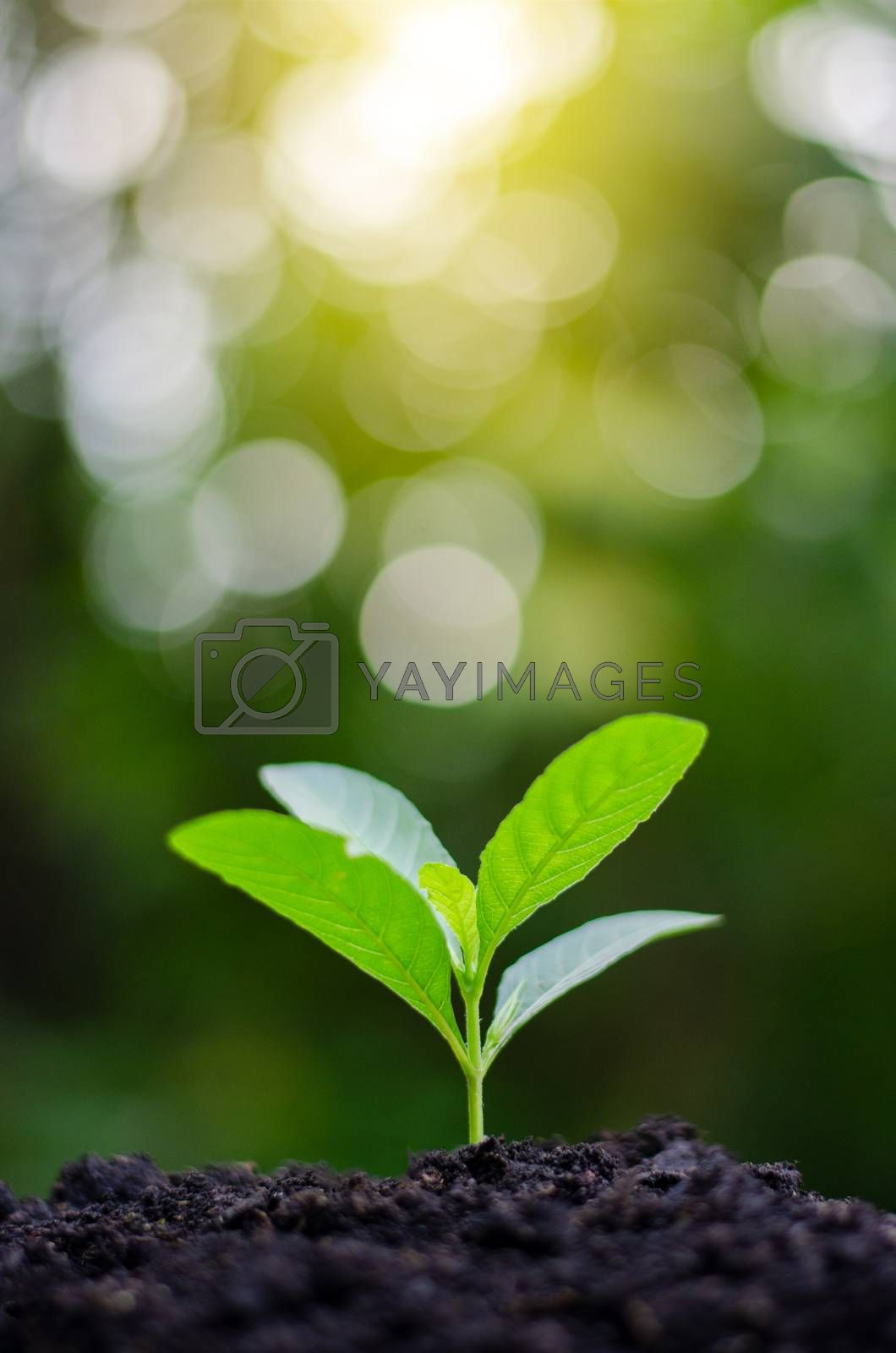 Planting seedlings young plant in the morning light on nature background by Sarayut