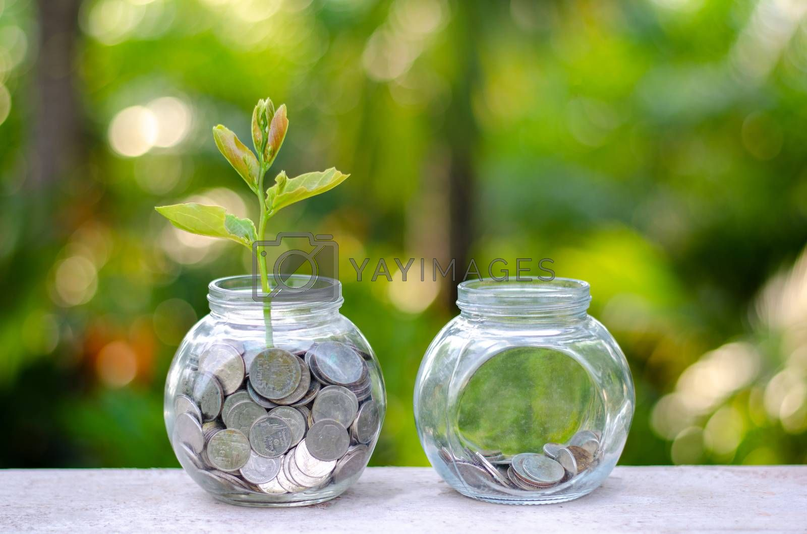 Coin tree Glass Jar Plant growing from coins outside the glass jar on blurred green natural background money saving and investment financial concept by Sarayut