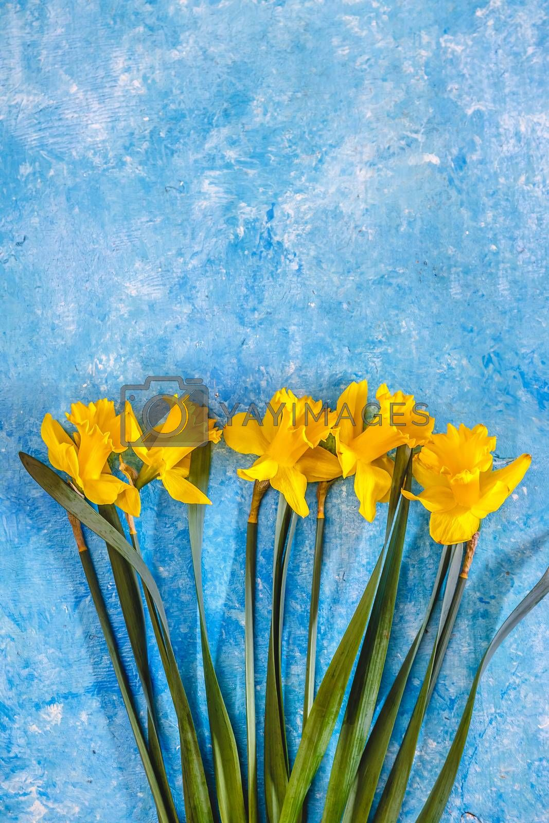 Daffodil flowers yellow on a blue marble background, there is an by Tanacha
