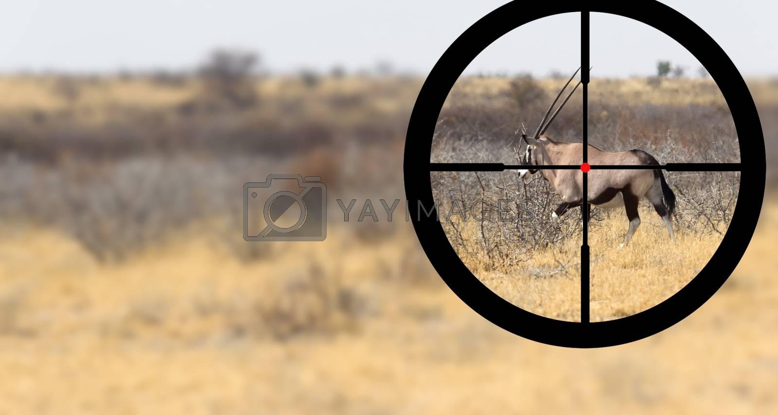 Hunting an oryx in the Kalahari desert by michaklootwijk