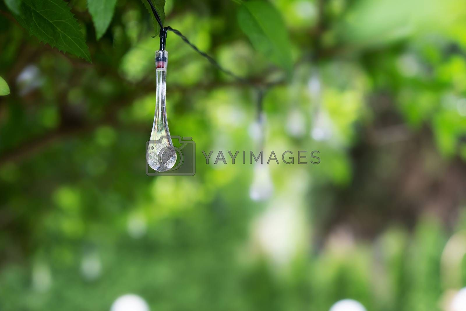 LED lighting in a droplet shape hanging in a green bush. by Daniel Albach