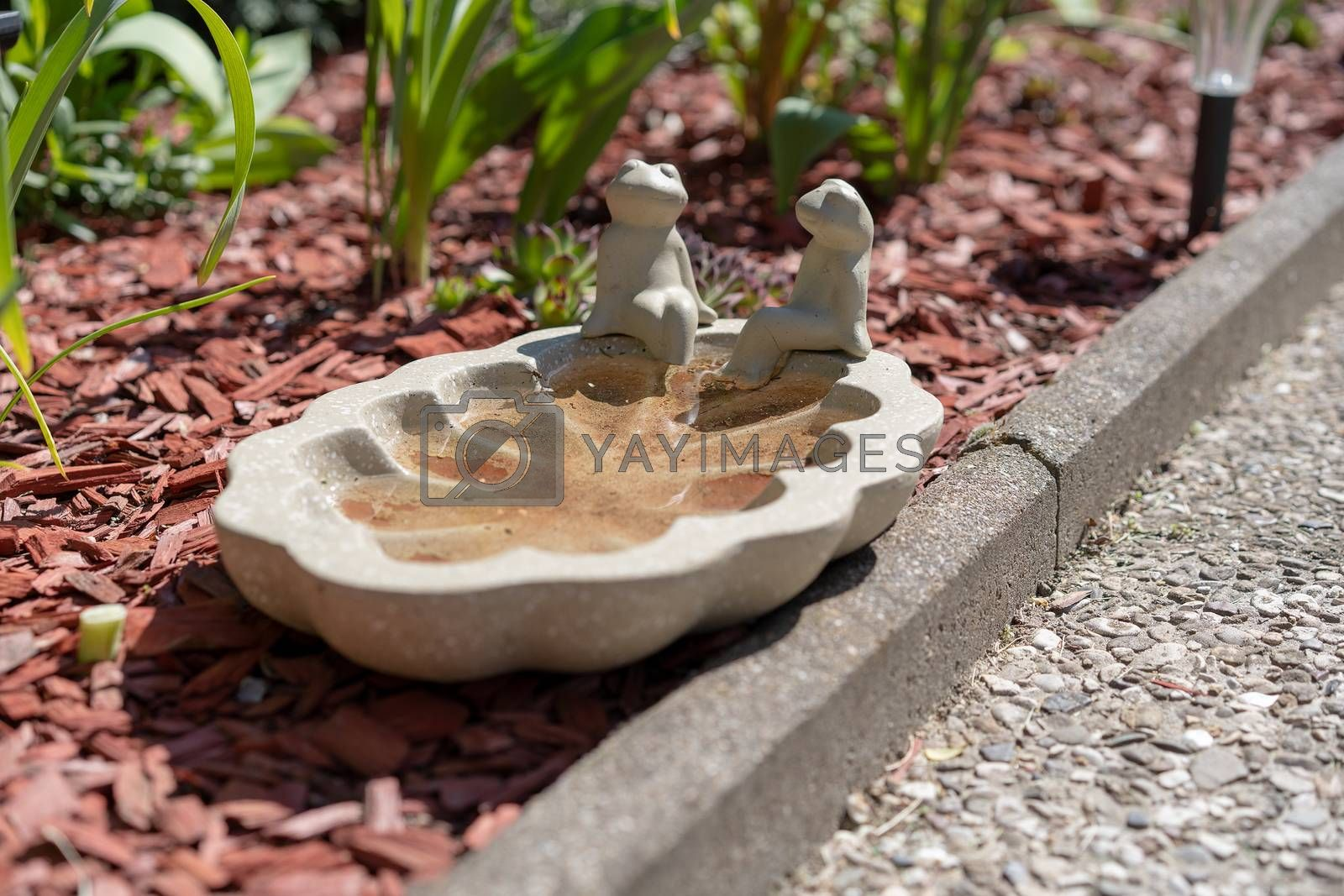 Two frog statues enjoy a sun bath on top of their own small pool serving as an insect and bird water reservoir in a garden besides walkway. This helps birds and insects to endure te heat of the summer and a drought.