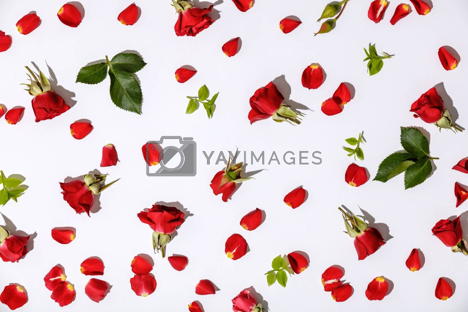 Floral pattern with red roses, petals and leaves on white backgr by klenova