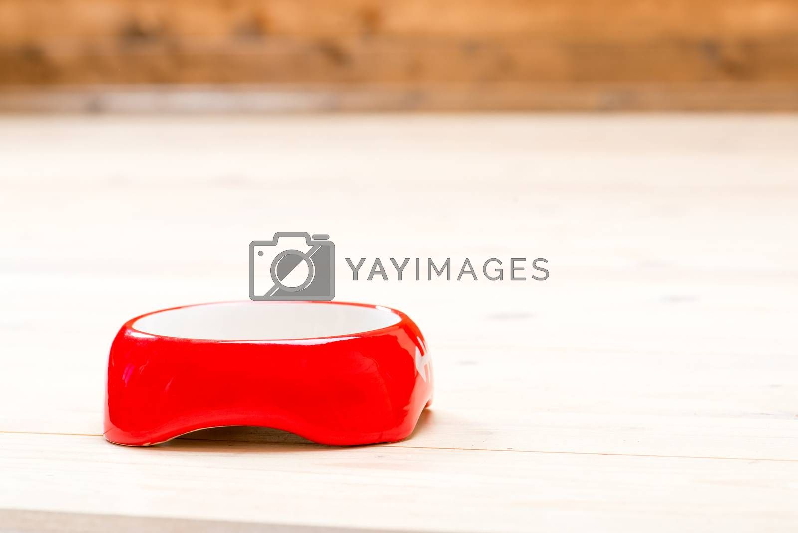empty red cat bowl on the floor in the house, space on top by Labunskiy K.