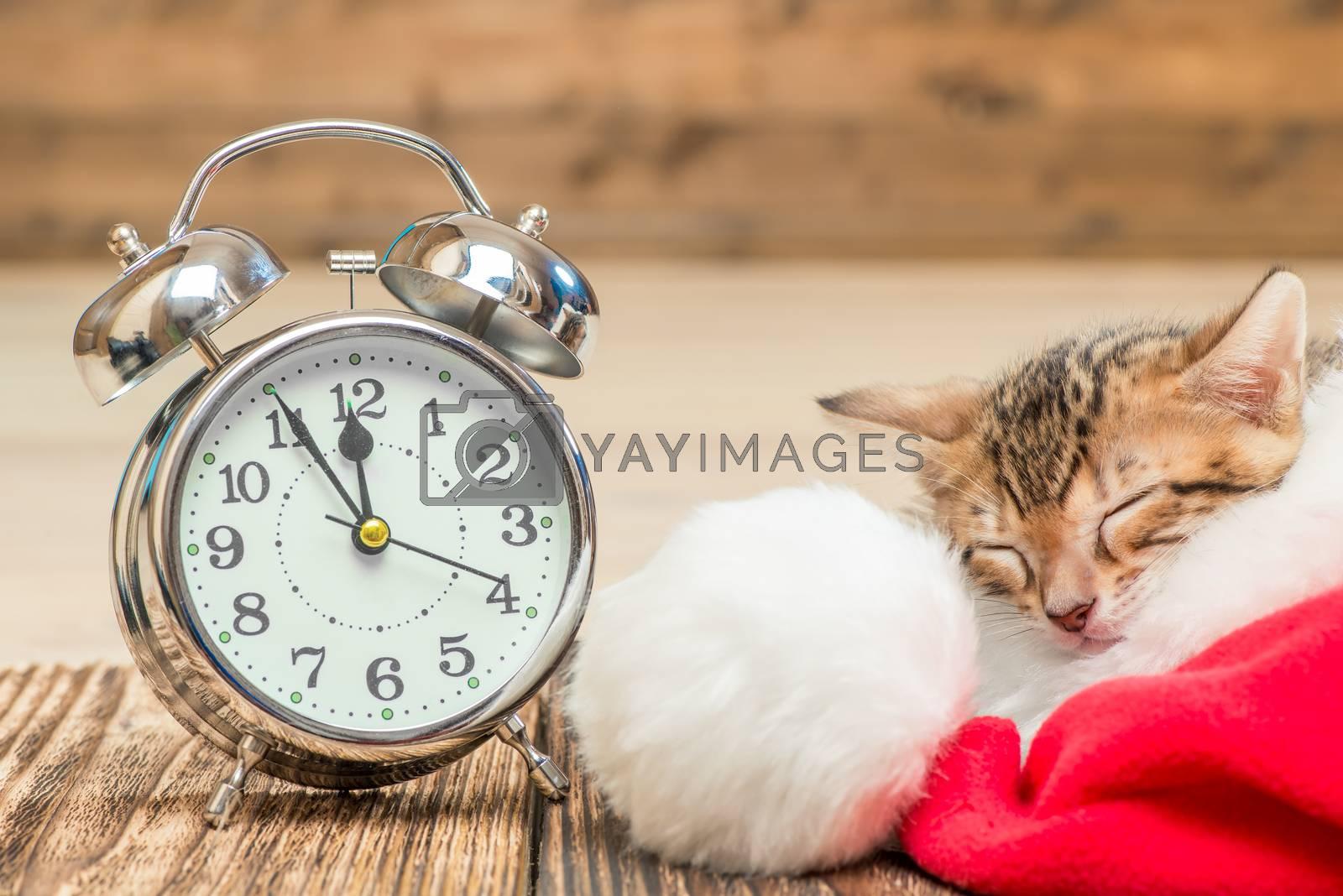 little kitty sleeps in Santa hat next to the alarm clock by Labunskiy K.